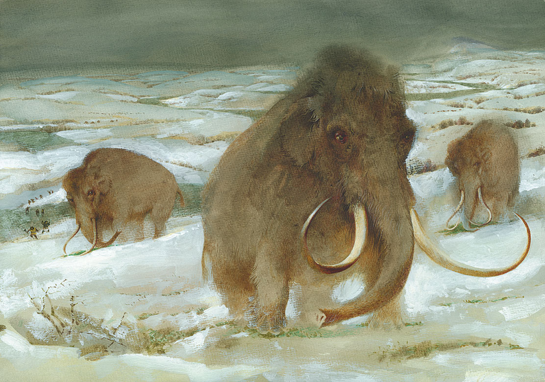 Zoo of the Last Ice Age